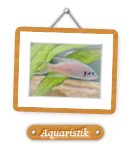 Bilder über Garnelen,Fische und Aquarien