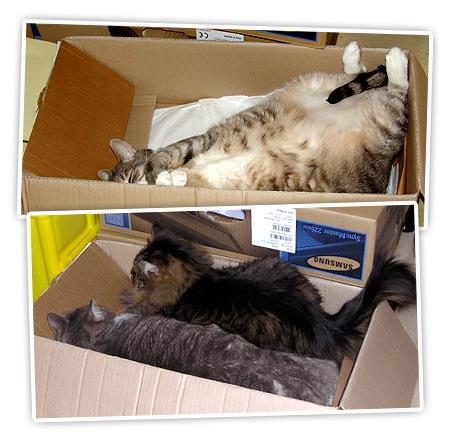 Kistenkatzen beim Probeliegen