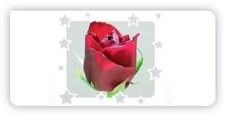 Bild bearbeitet mit Picture2Life.com