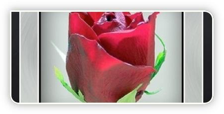 Bild bearbitet mit Pikifx.com