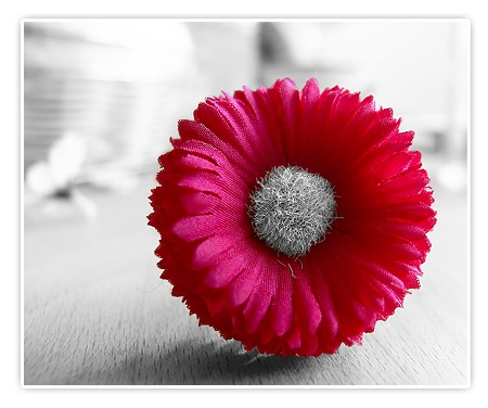 Colorkey - Stoffblume mit farbigen Blütenblättern