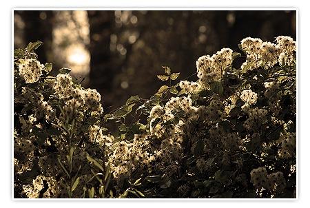 Licht und Schatten - Sepia