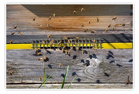 fleissige Bienen