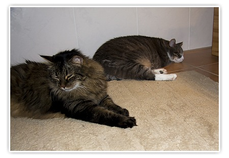 Katzen und Fussbodenheizung
