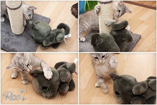 Rico - Plüschtier - Katze - norwegische Waldkatze - Treuepunkte Fressnapf