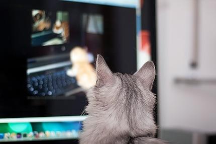 Katze schaut Katzen im Internet an