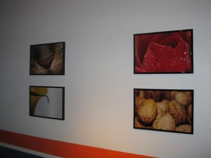 Meine Fotos an Tims Wand