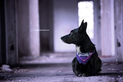 Nickis Hund Mila - vorher auf Foto