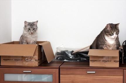 Tammy und Rico im Karton