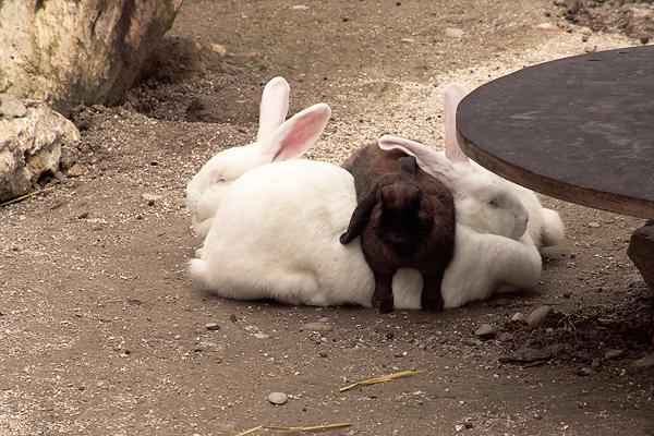 Hasen - Kaninchen